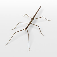 Stick Insect 3D models