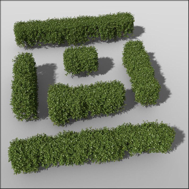 Box_hedge_50cm_slim_bundle.jpg