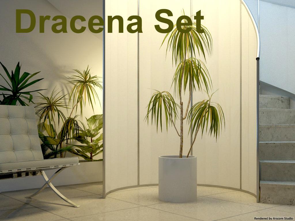 Dracaena1.jpg