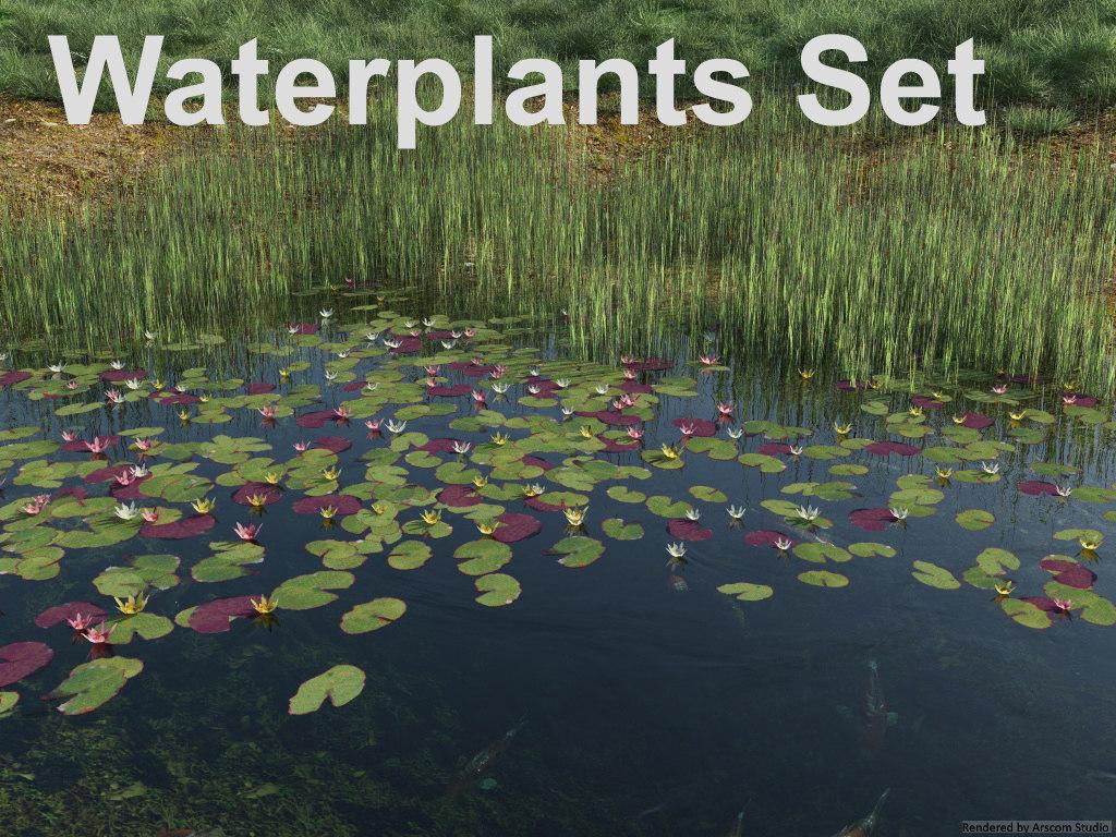 Reed-Lilies1.jpg