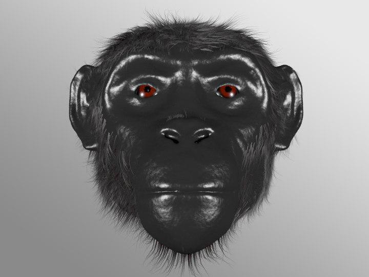 Ape Head Image.jpg