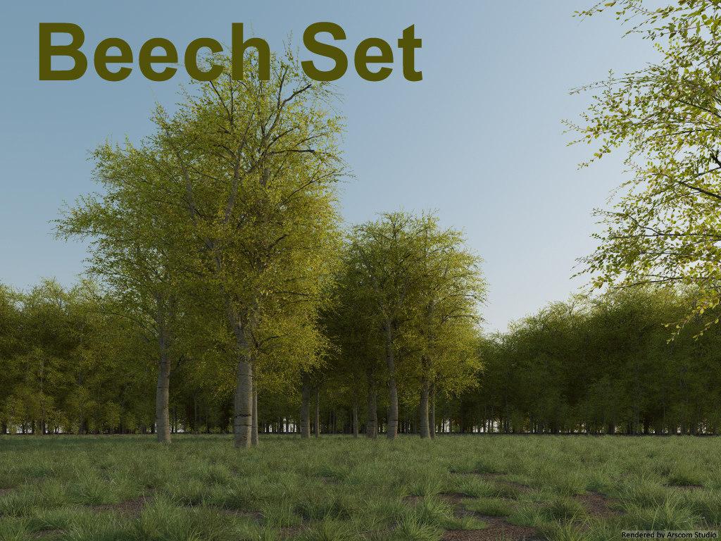 Beech1.jpg