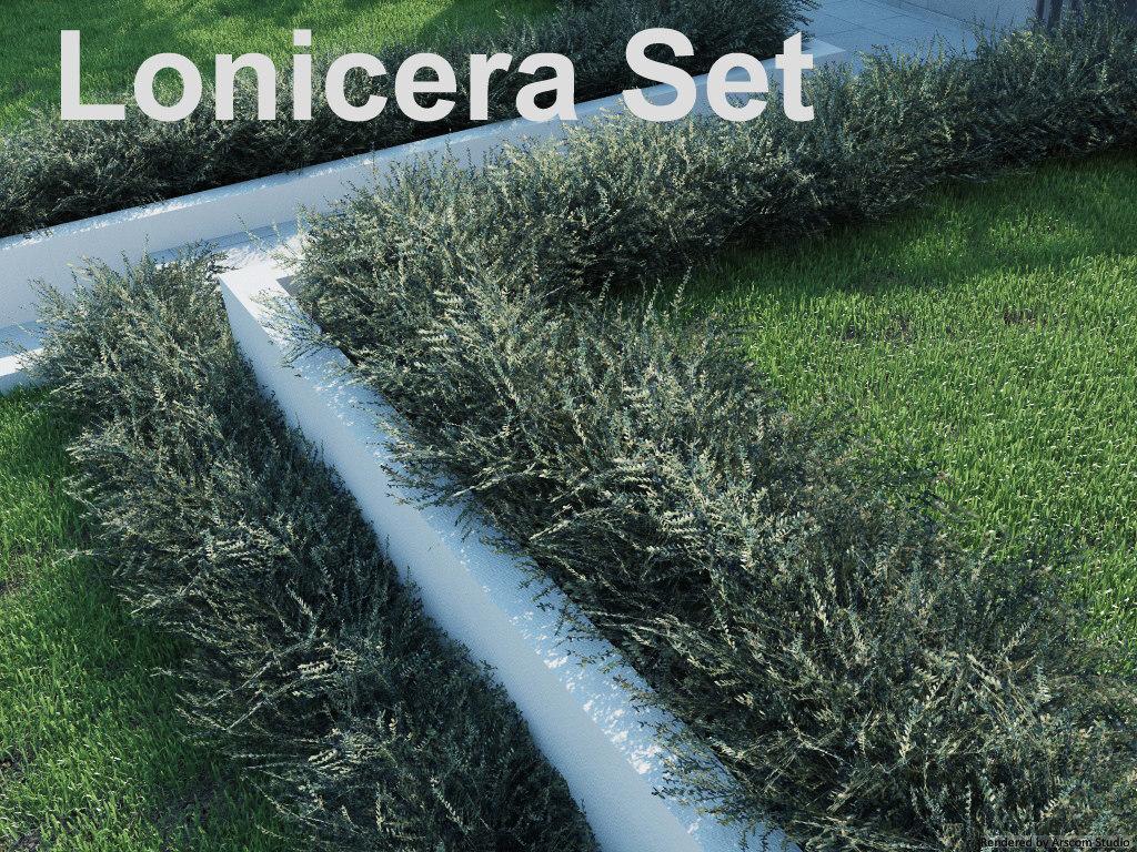 Lonicera1.jpg