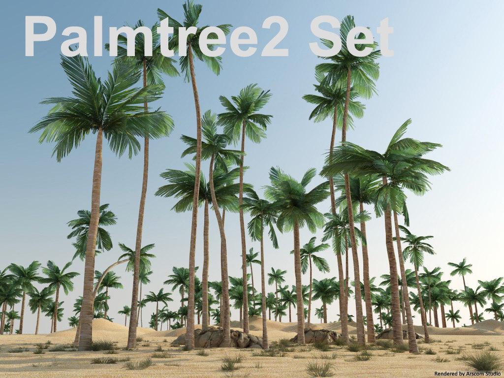 Palmtree 2_1.jpg