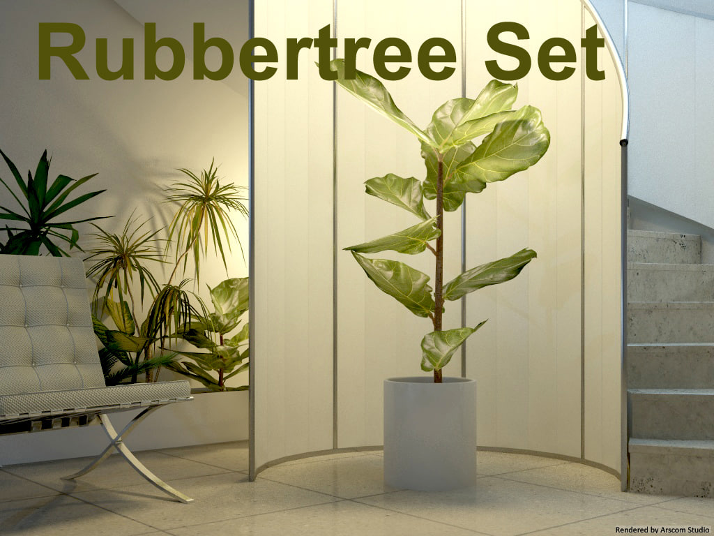 Rubbertree1.jpg