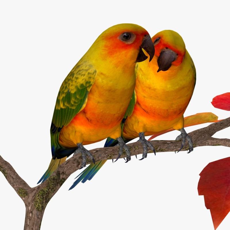 AB Sun Parakeets