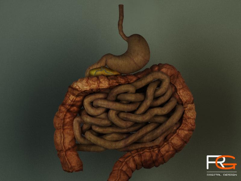 Digestive-System01.jpg
