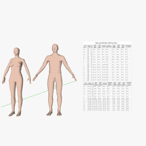 Male_and_female_Homo_sapiens 3D Models