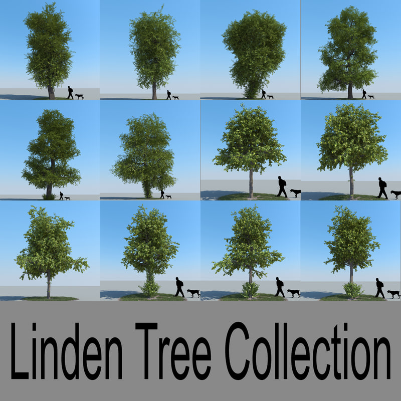 Linden/Lime Tree Collection