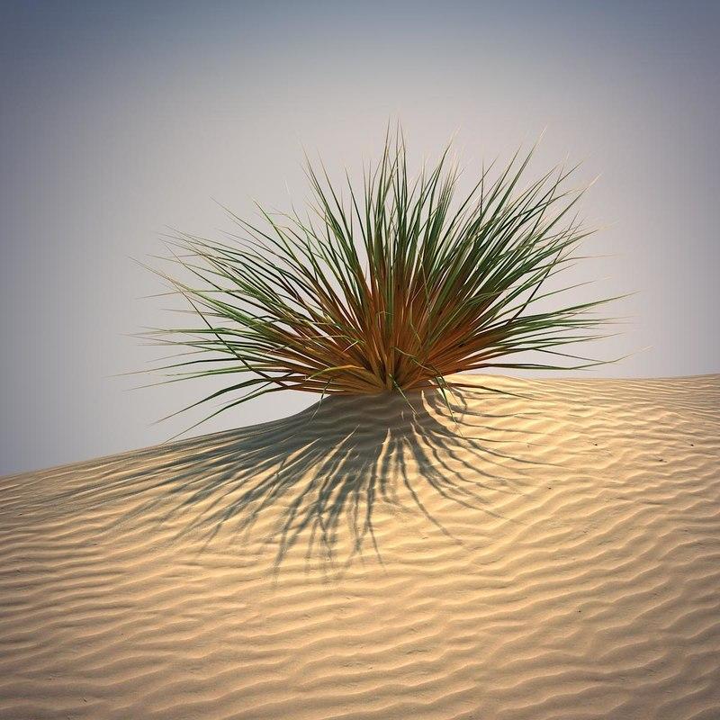 top desert grass images for pinterest tattoos. Black Bedroom Furniture Sets. Home Design Ideas