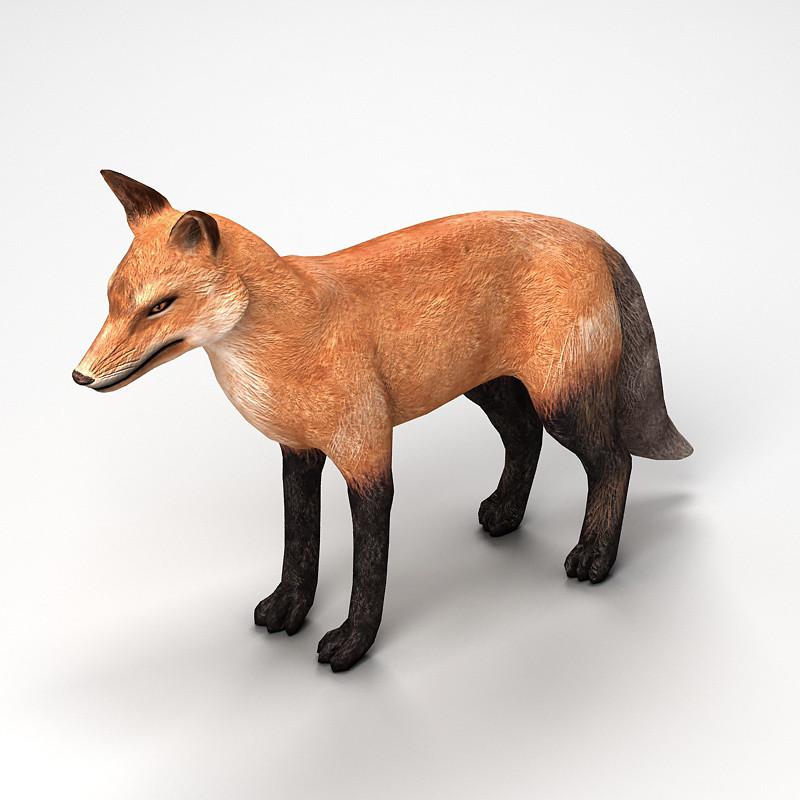 fox_0000.jpg