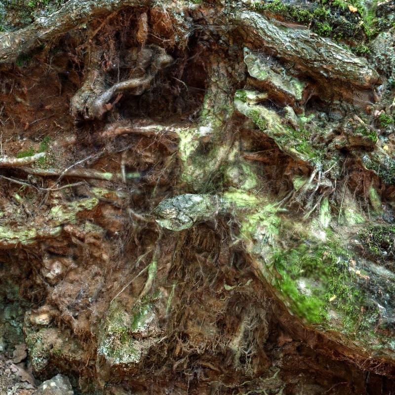 5-Photorealistic-Nature-Scene-by-Mark-Florquin-Holographer.jpg