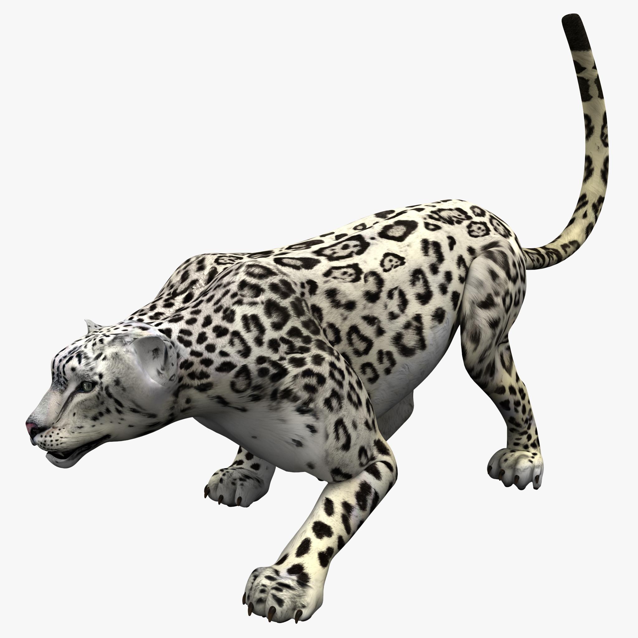 Snow Leopard Pose 1