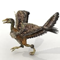 Archaeopteryx 3D models