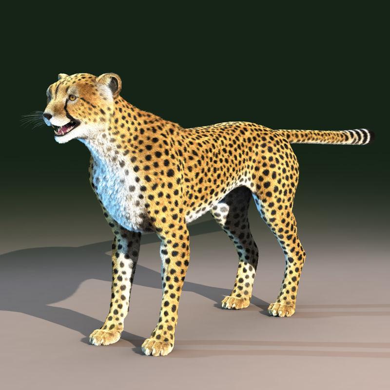 CheetahOpenDarkB.jpg