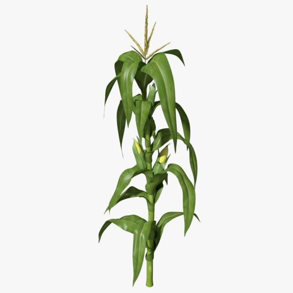Corn Stalk 3D Models