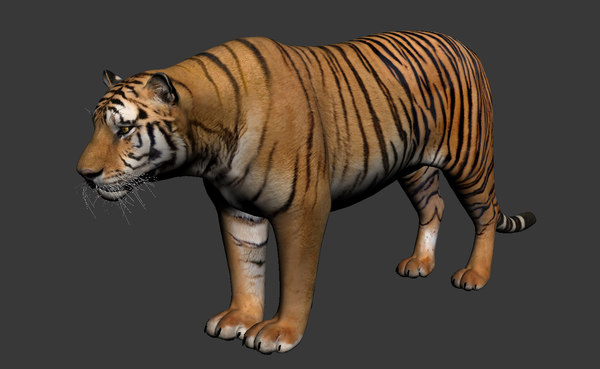 Tiger_onlymodel 3D Models