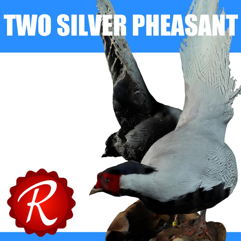 Two Silver Pheasants