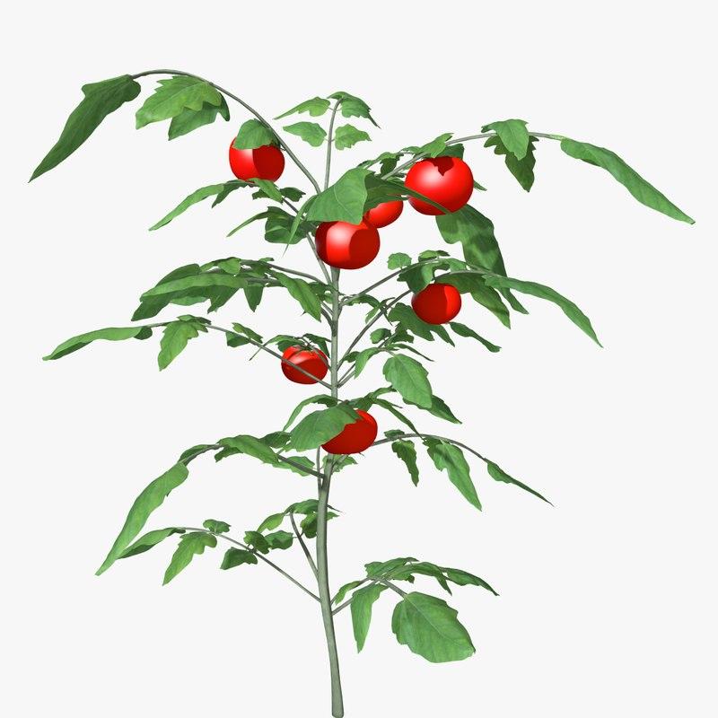3d tomato plant model. Black Bedroom Furniture Sets. Home Design Ideas