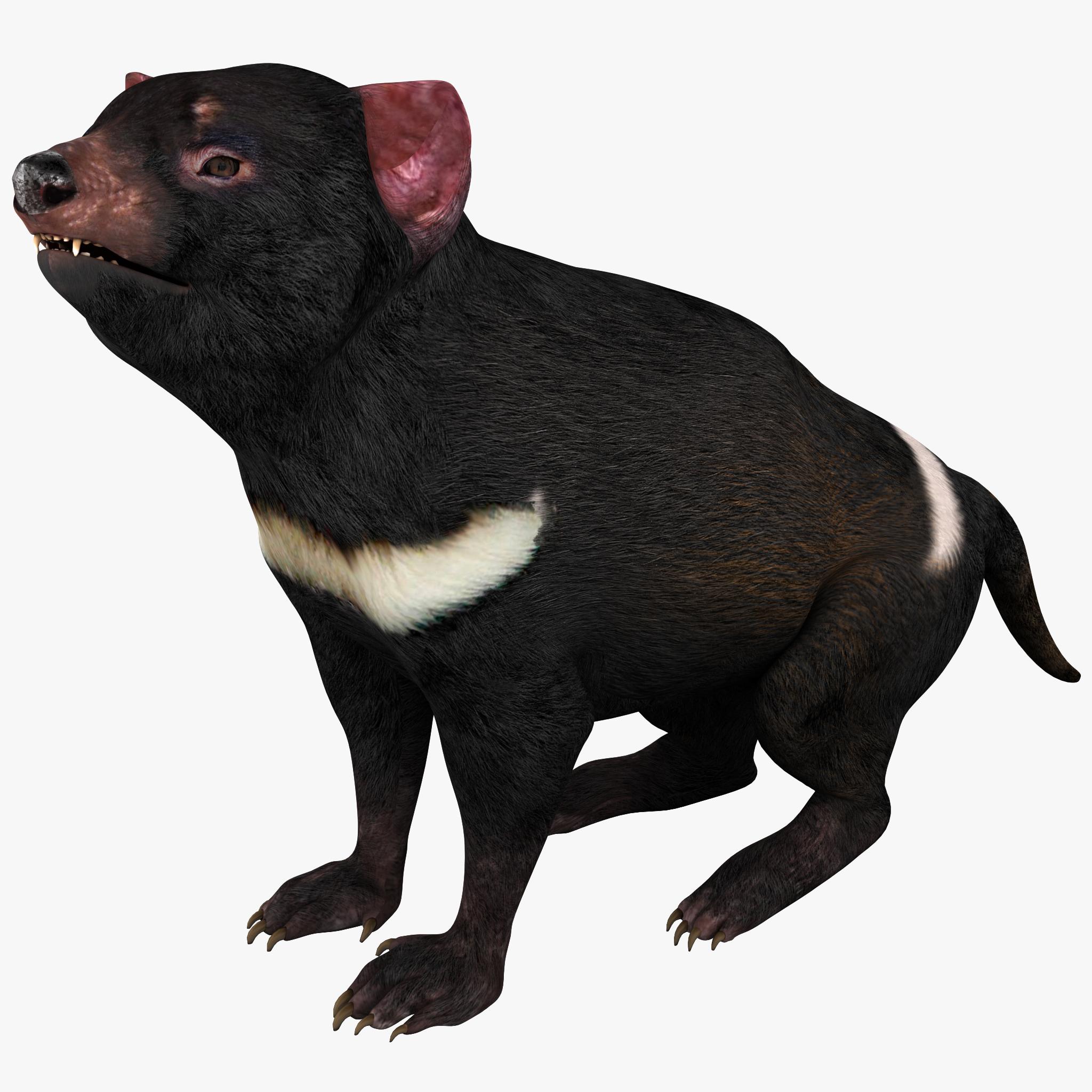 Tasmanian Devil Pose 2_1.jpg