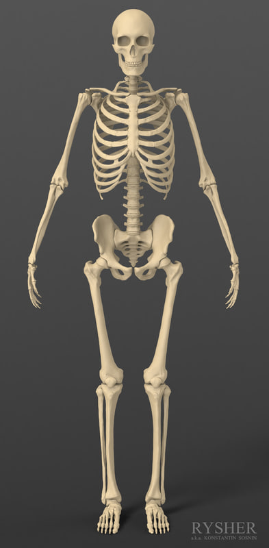 Skeleton_frontal view.jpg