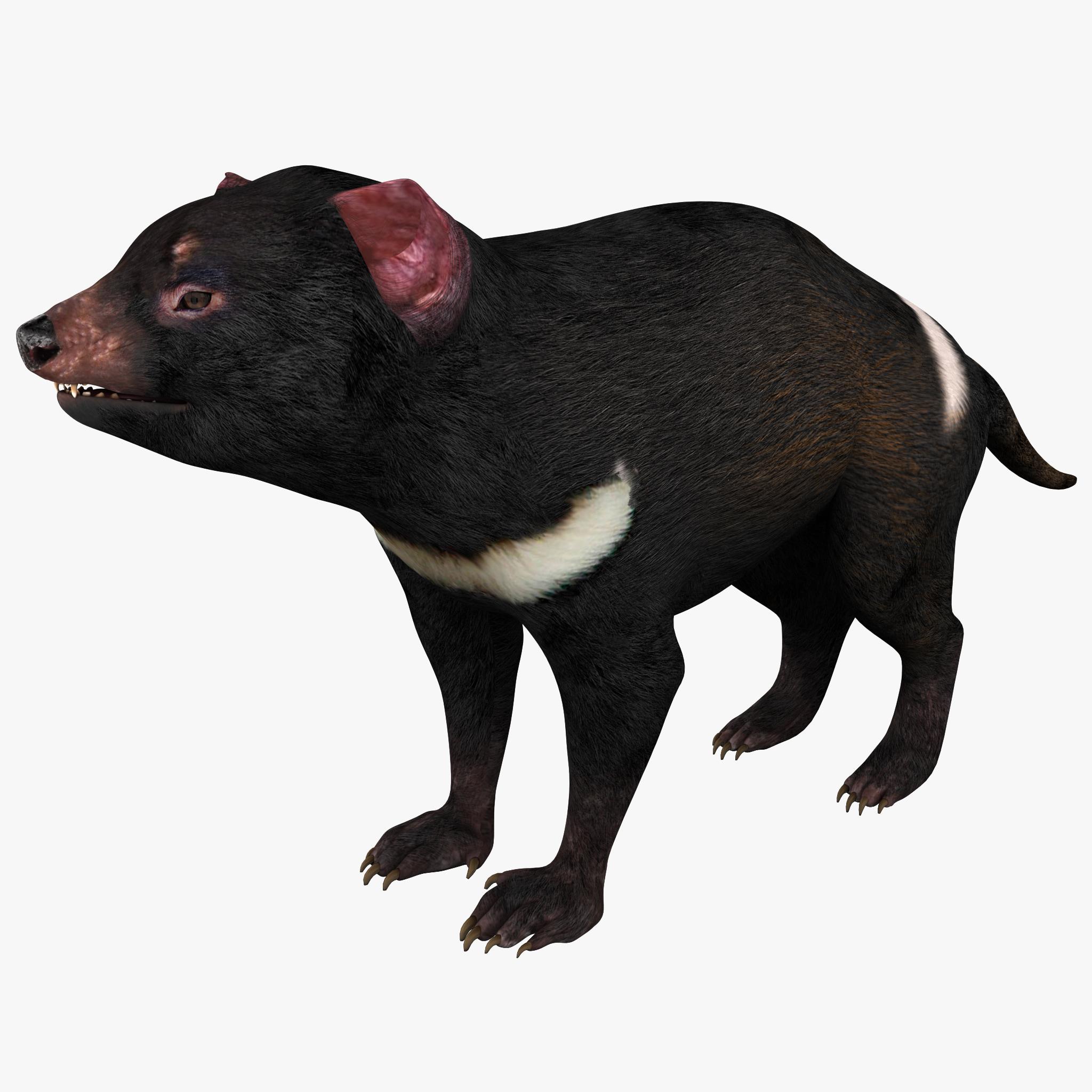 Tasmanian Devil_1.jpg