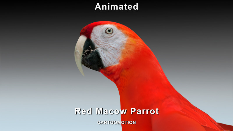 Red Macow Parrot.jpg