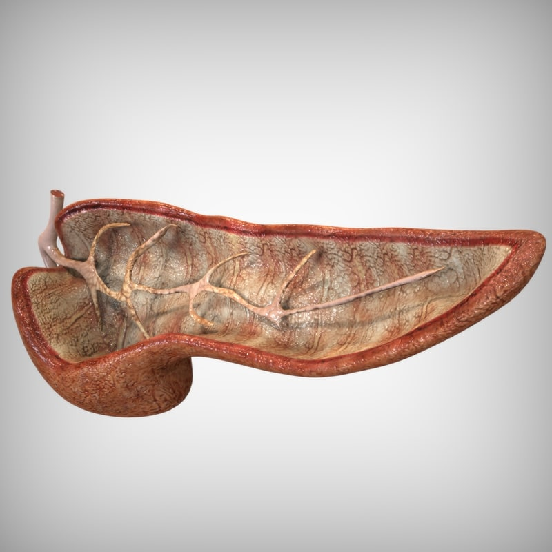 maya human pancreas anatomy