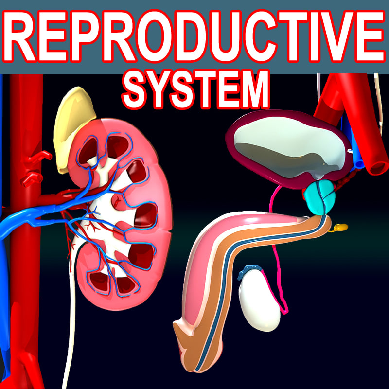 10 24 2014 male reproductive 1 Reproductive endocrine testing and exogenous hormone therapy in equine developmental abnormalities of the male reproductive tract j equine vet sci 2014.