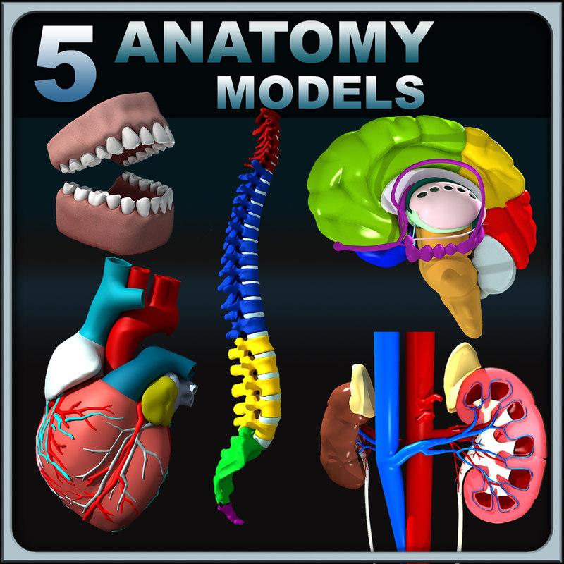 Anatomy_Collection_render_01.jpg