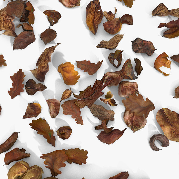 Dry Dead Autumn Leaves On Ground 3D Models