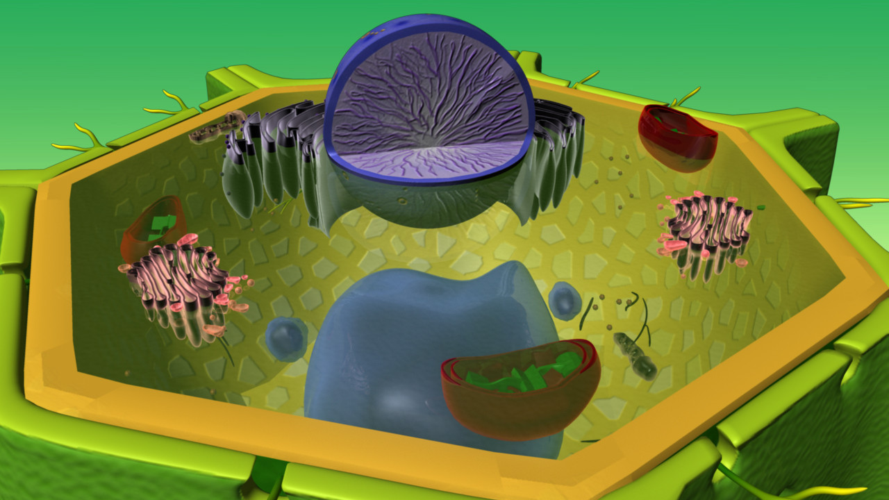Ultra Structure of Plant Cell_03.jpg