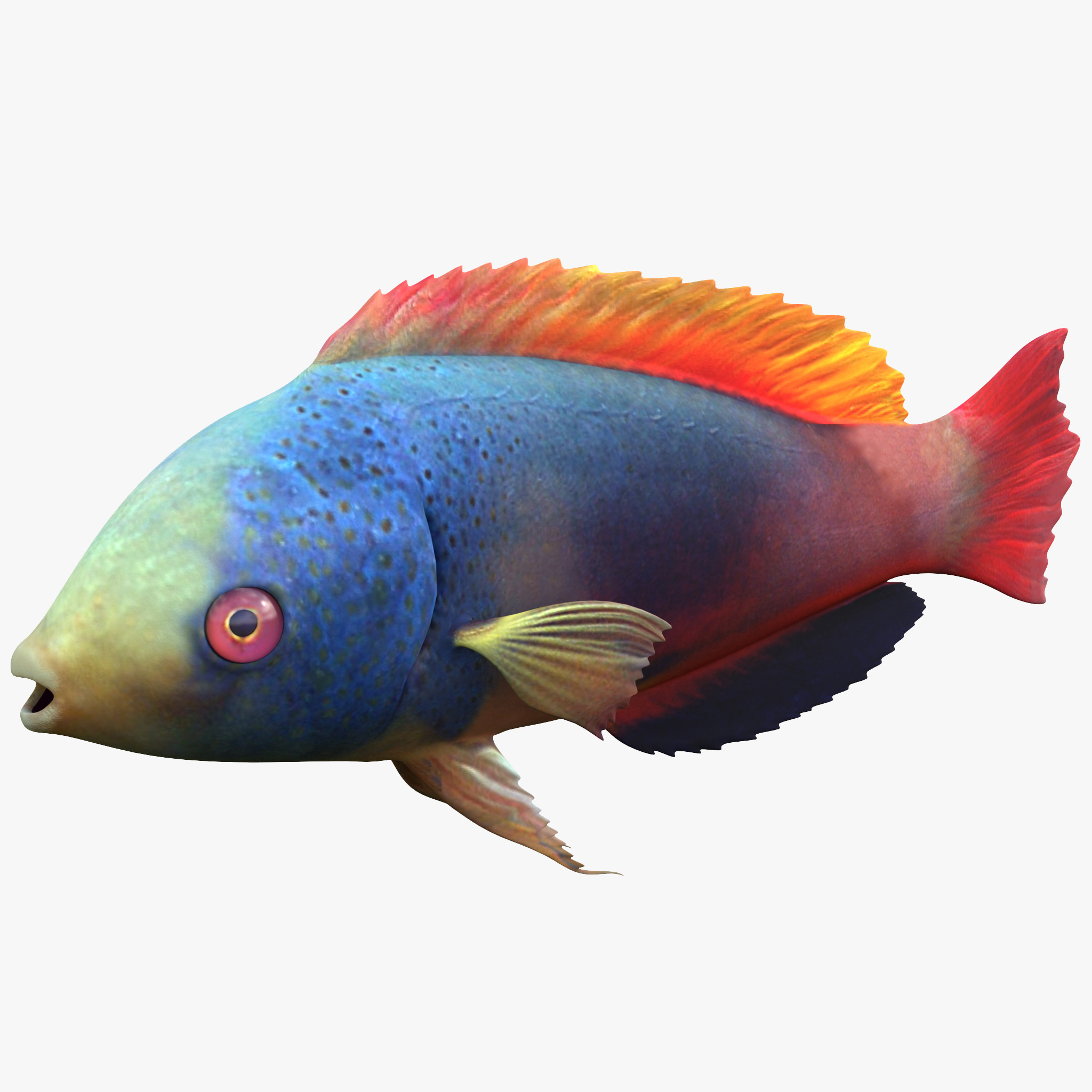 612265_Wrasse_Fish_000_1.jpg