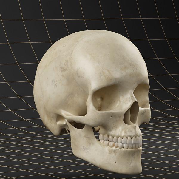 skull_01