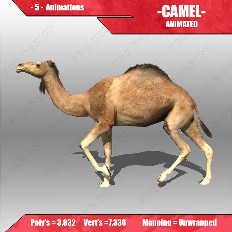 Camel_3.jpg