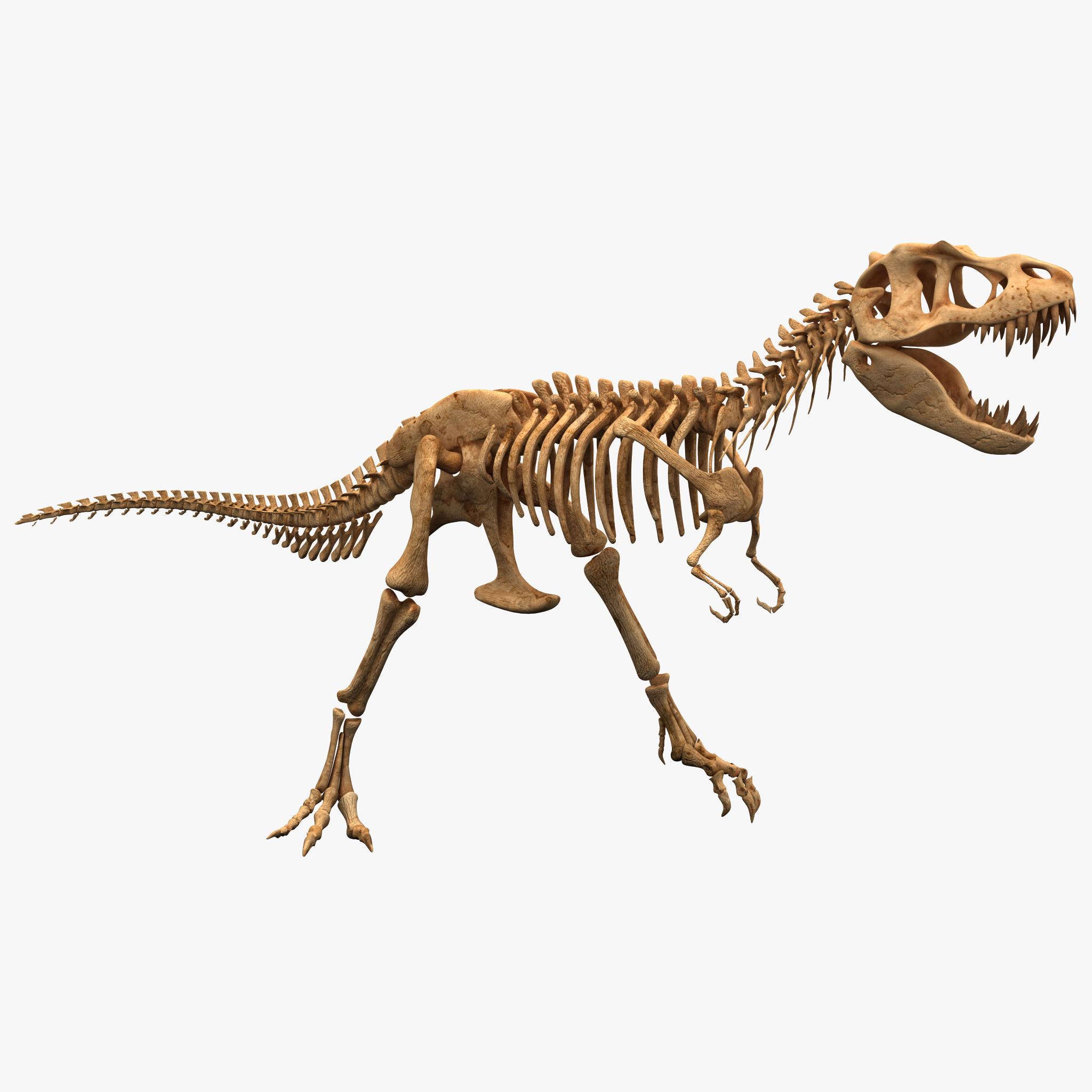 Dinosaur T-rex Bones 2_1.jpg