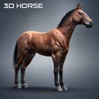 thoroughbred 3D models