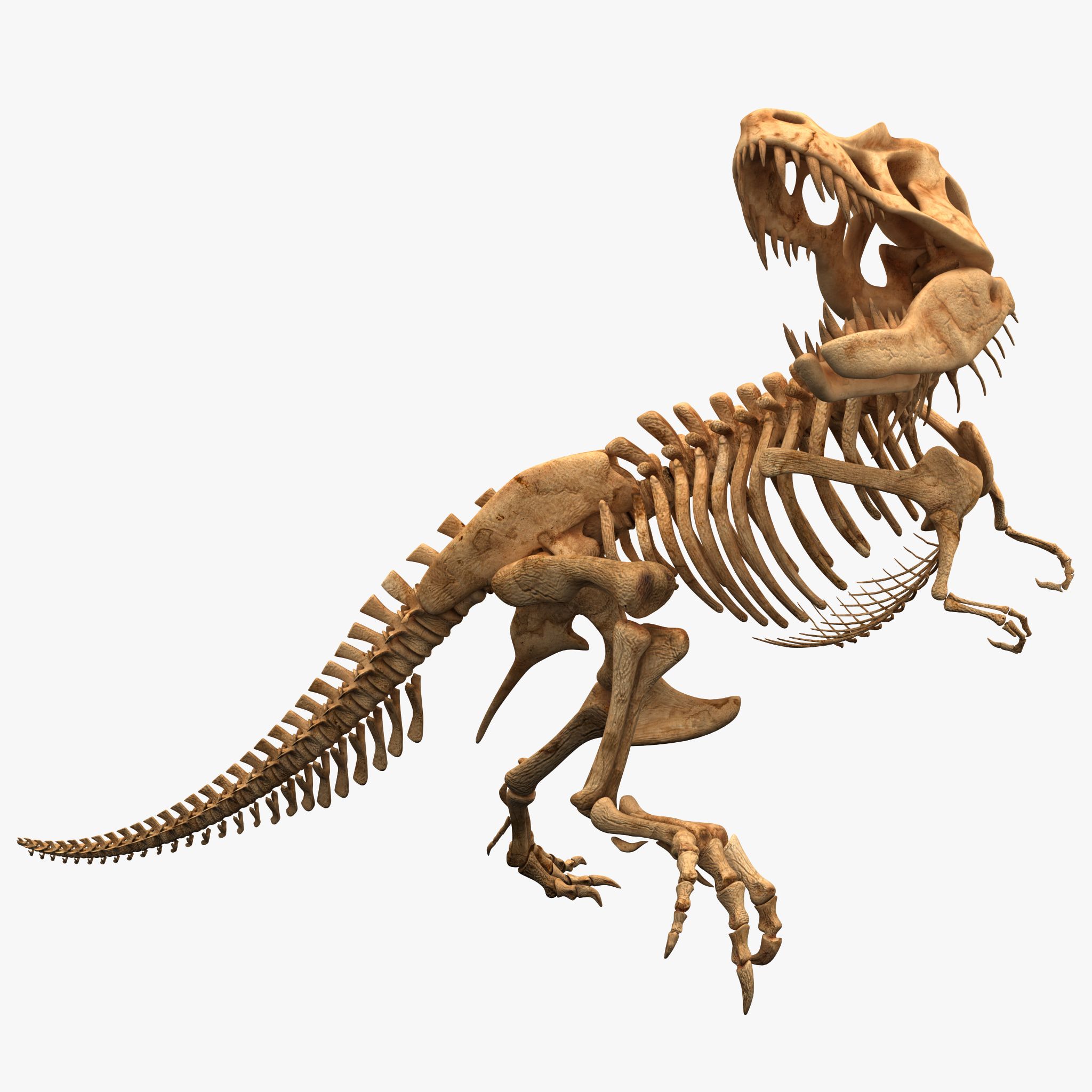 Dinosaur T-rex Bones_1.jpg