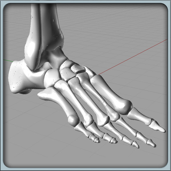 Foot Bones Solidworks 3D Models