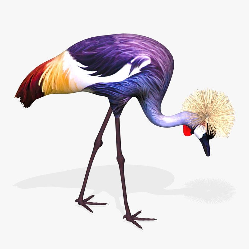 AB Grey Crowned Crane