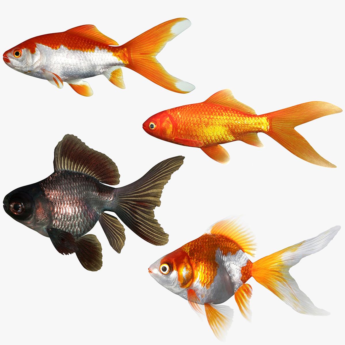 Goldfish-Set_Singature-a.jpg