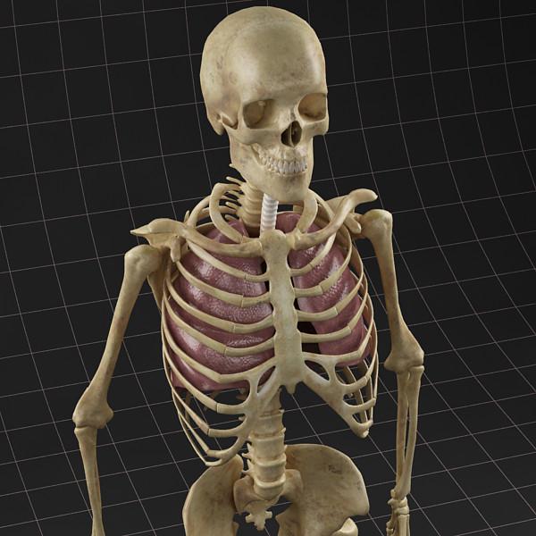 Anatomy_Lungs_Skeleton_c