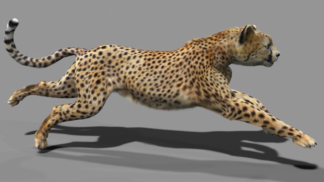 Cheetah_run_fur.jpg
