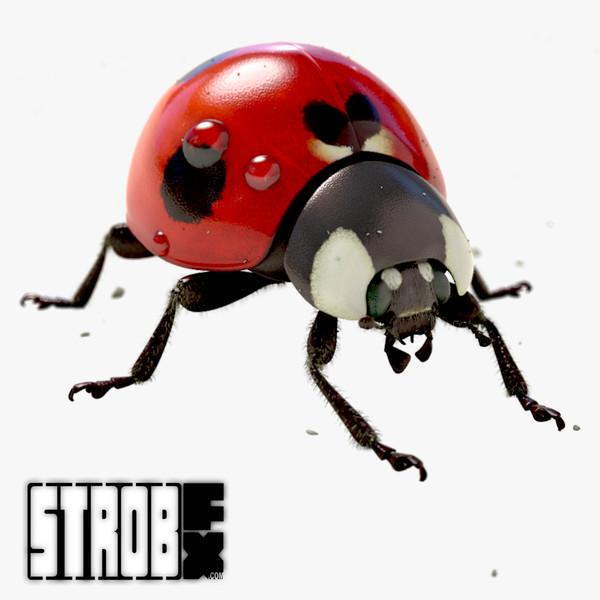 Ladybug (Animated) (VRayFur) 3D Models