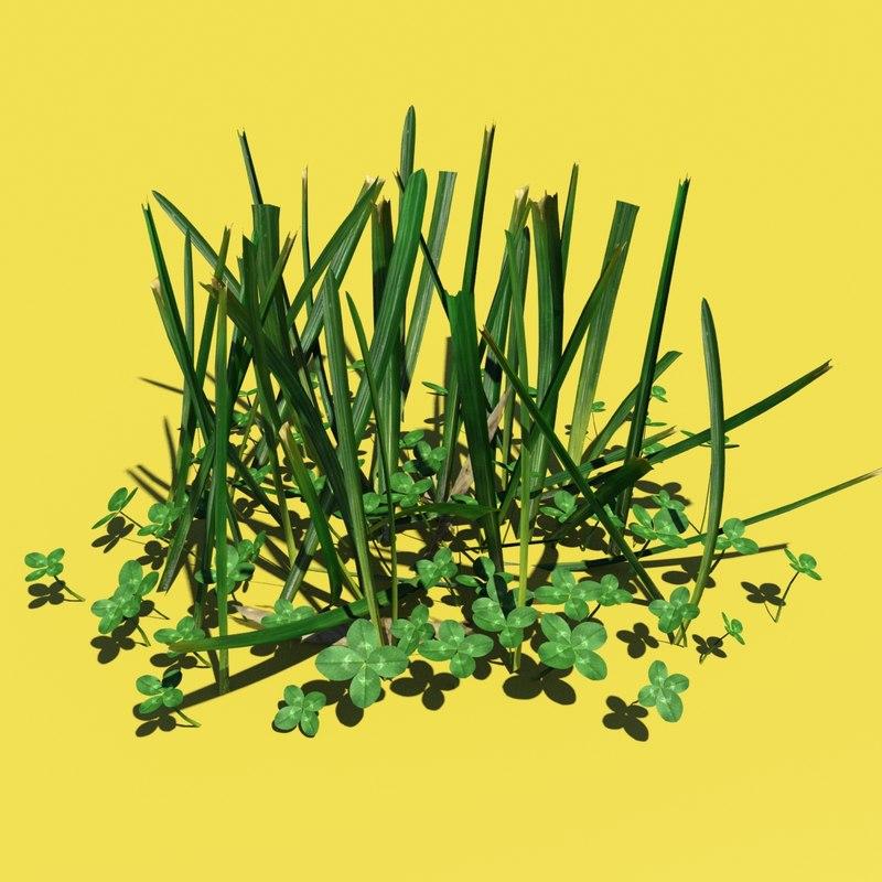 Grass & Clovers