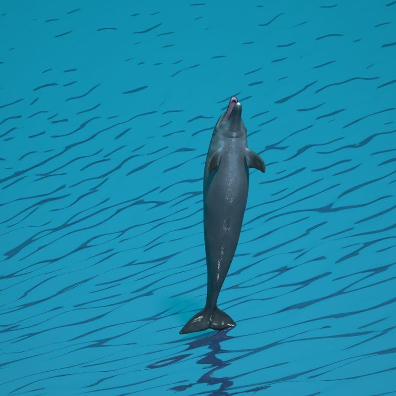 dolphin80-0019.jpg