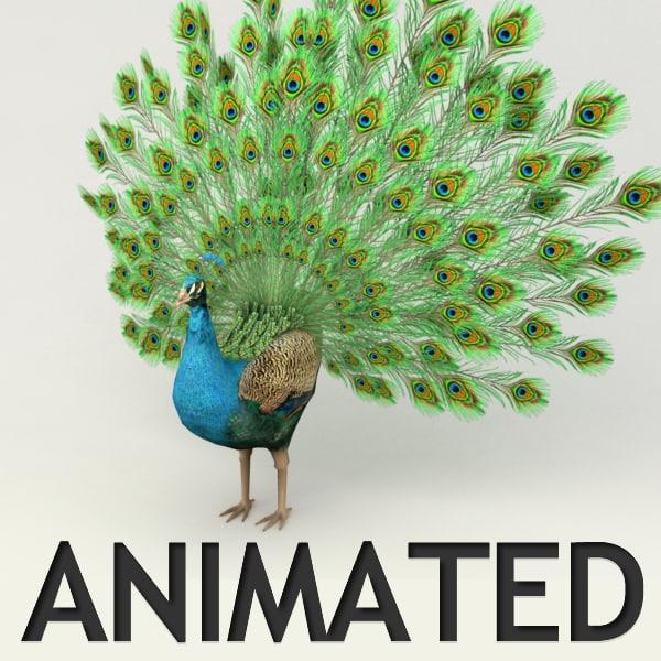 Peacock animated