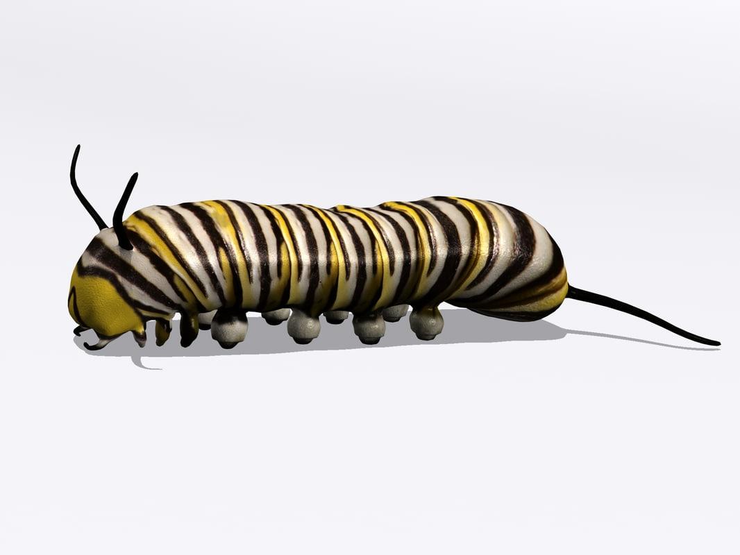 Caterpillar1.jpg
