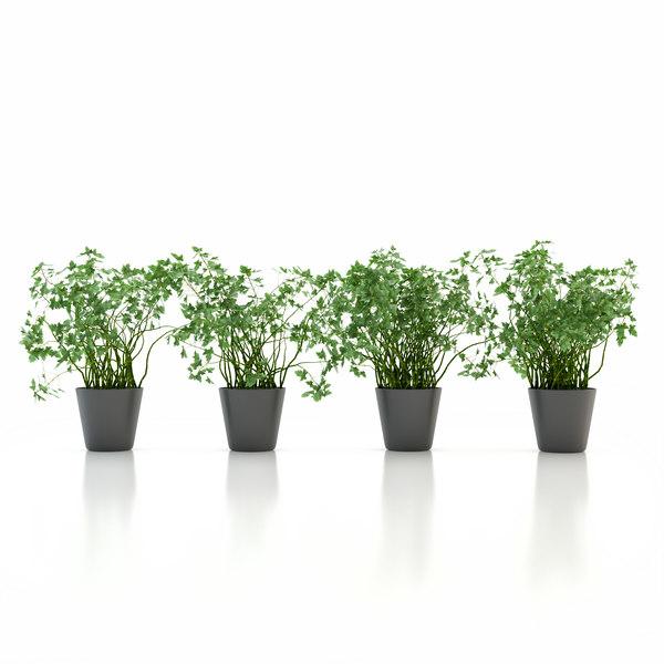 Parsley Pot Plant Texture Maps