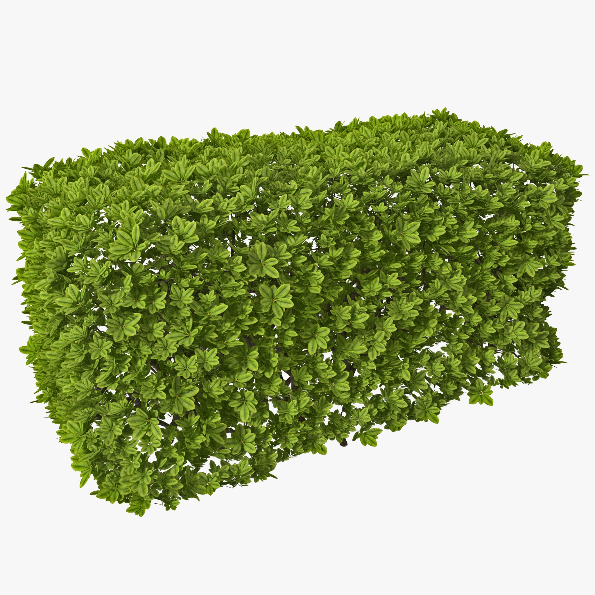 Rectangular box hedge 3d model by 3d molier 3d molier 3d for Garden shrubs